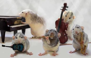 rat-band2